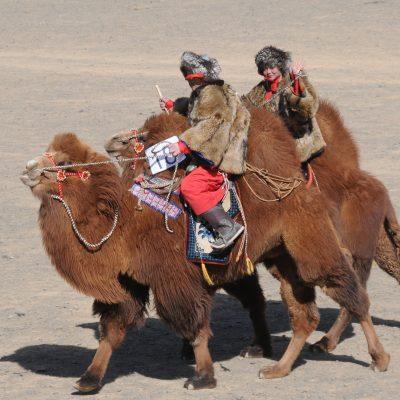 Camel Festival in Mongolia's Gobi