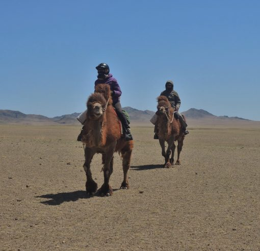 Winter Camel Trekking in the Gobi