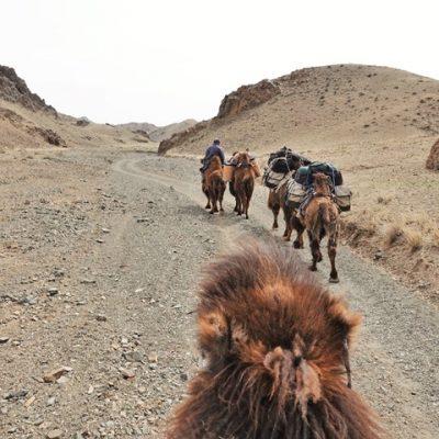 Winter Camel Trekking in the Gobi, Mongolia