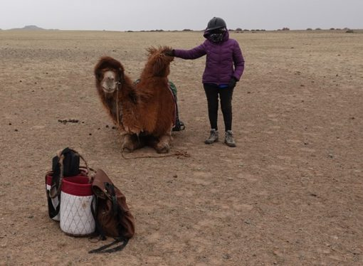 Winter Camel Trekking in the Gobi, Stone Horse Expeditions, Mongolia
