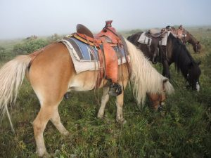 Stone Horse Mongolia, Saddle for Expedition Riding, Trails in Mongolia