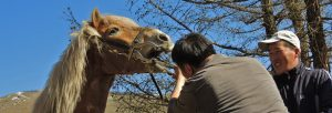 equine dentistry, horse care, floating teeth, horse veterinarian, Stone Horse