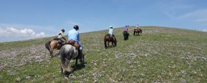 The Beauty that is Mongolia - A Riding Guest speaks of the Once in a Life Time Opportunity
